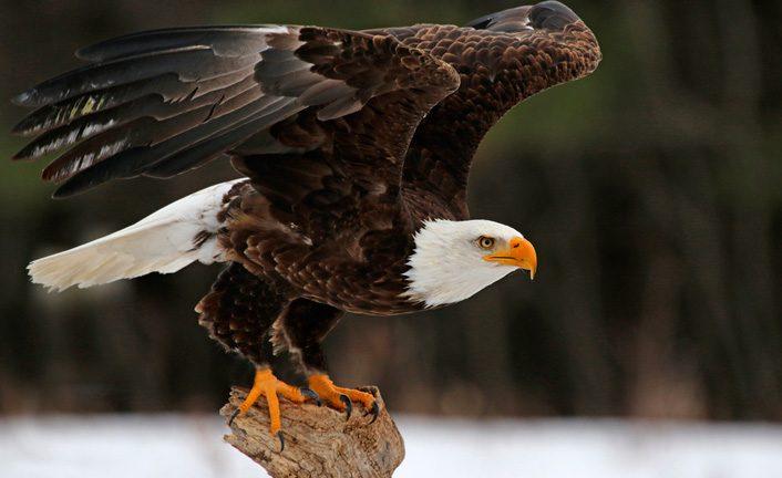 En las alas de la fe de águila