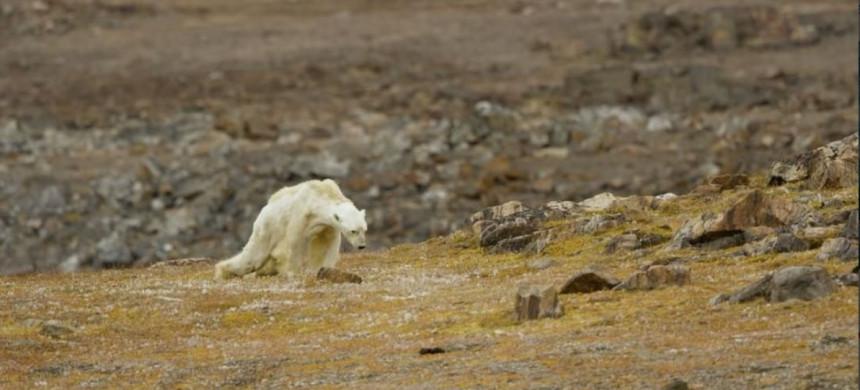 Lo que un oso hambriento tiene que ver con el Apocalipsis