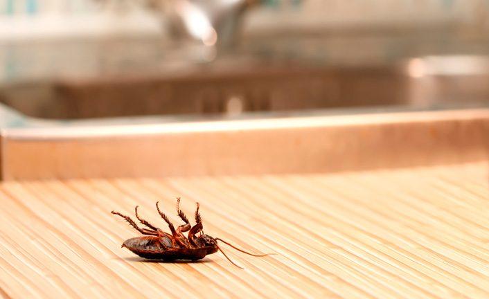 Cucarachas tontas