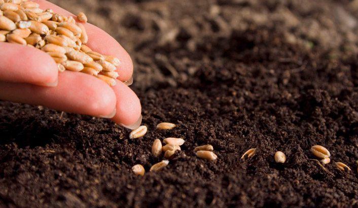 El siervo y la semilla