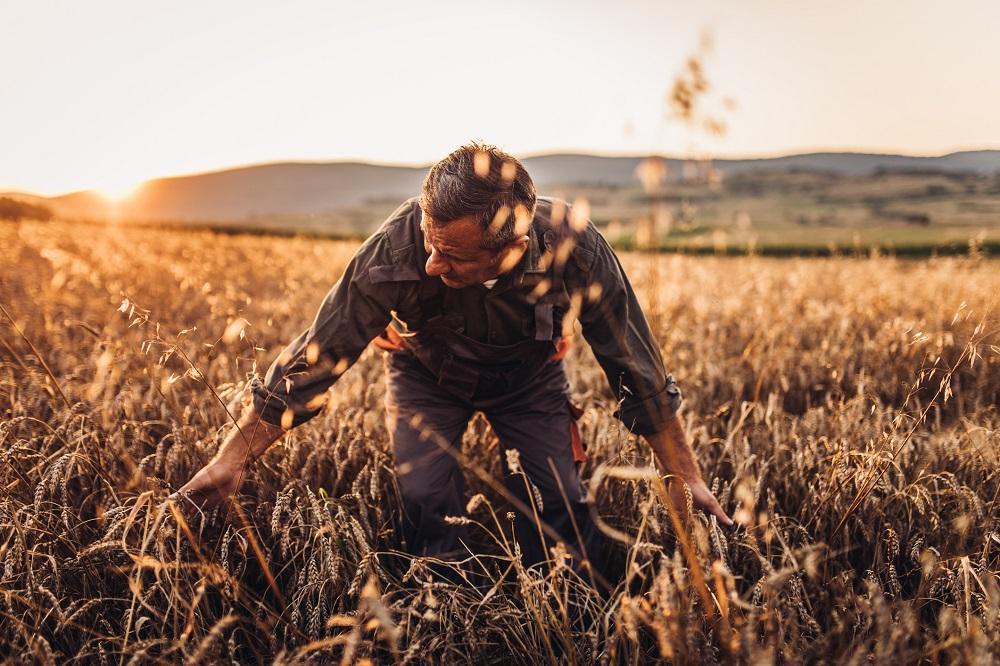 La cizaña y el trigo: el tiempo revela quién es quién